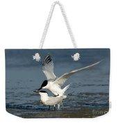 Sandwich Terns Mating Weekender Tote Bag