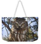 Saw Whet Owl Weekender Tote Bag