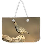 Scaled Quail Callipepla Squamata Weekender Tote Bag