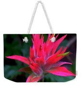 Scarlet Paintbrush On Swiftcurrent Pass Trail In Glacier National Park-montana Weekender Tote Bag