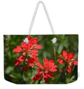 Scarlet Paintbrush. Texas Wildflowers. Castilleja_indivisa Weekender Tote Bag