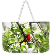 Scarlet Tanager - 11 Weekender Tote Bag