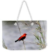 Scarlet Tanager - Coastal - Migration Weekender Tote Bag