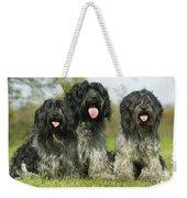 Schapendoes, Or Dutch Sheepdogs Weekender Tote Bag