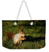 Sciurus Vulgaris In Evening Light Weekender Tote Bag