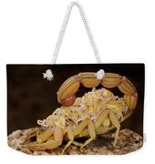 Scorpion Mother Carrying Her Brood Weekender Tote Bag