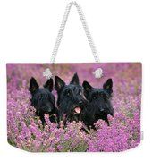 Scottish Terrier Dogs Weekender Tote Bag