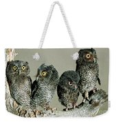 Screech Owl Chicks Weekender Tote Bag