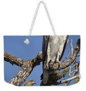 Sea Eagle And Brown Kite Sharing A Tree Weekender Tote Bag