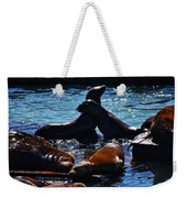 Sea Lions In San Francisco Bay Weekender Tote Bag by Aidan Moran