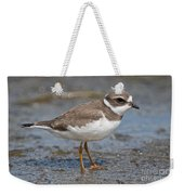 Semi-palmated Plover Pictures 59 Weekender Tote Bag