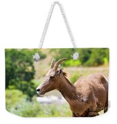 Sheep Portrait Weekender Tote Bag