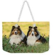 Shetland Sheepdogs Weekender Tote Bag