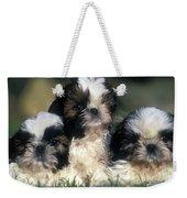 Shih Tzu Puppy Dogs Weekender Tote Bag