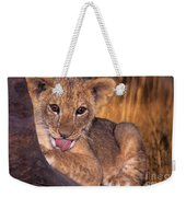 Shy African Lion Cub Wildlife Rescue Weekender Tote Bag