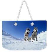 Siberian Husky Dogs Weekender Tote Bag