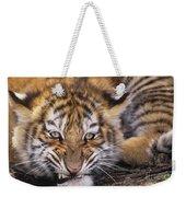 Siberian Tiger Cub Panthera Tigris Altaicia Wildlife Rescue Weekender Tote Bag