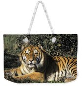 Siberian Tiger Endangered Species Wildlife Rescue Weekender Tote Bag