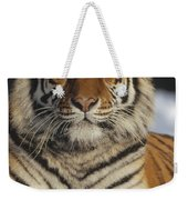 Siberian Tiger Portrait In Snow China Weekender Tote Bag