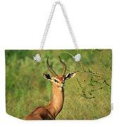 Single Grant's Gazelle Weekender Tote Bag