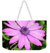 Single Pink African Daisy Against Green Foliage Weekender Tote Bag