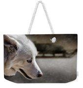 Sled Dog Weekender Tote Bag by Bob Orsillo