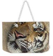 Sleepy Tiger Portrait Weekender Tote Bag