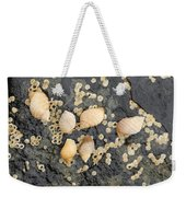 Snail Family Vacation Weekender Tote Bag