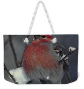 Snow Covered Pine Grosbeak Weekender Tote Bag