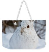 Snowshoe Hare Pictures 130 Weekender Tote Bag