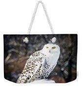 Snowy Owl Cold Stare Weekender Tote Bag