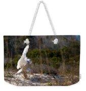 Snowy Owl In Florida 20 Weekender Tote Bag