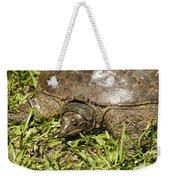 Florida Soft Shelled Turtle - Apalone Ferox Weekender Tote Bag
