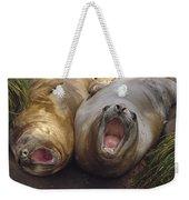 Southern Elephant Seal Pair Calling Weekender Tote Bag by Konrad Wothe