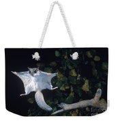 Southern Flying Squirrel Weekender Tote Bag by Nick Bergkessel Jr