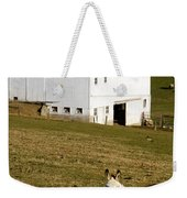 Spotted Donkey Looks Uninterested Weekender Tote Bag