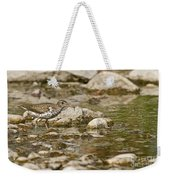 Spotted Sandpiper Pictures 36 Weekender Tote Bag