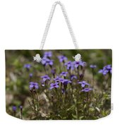 Springtime Tiny Bluet Wildflowers - Houstonia Pusilla Weekender Tote Bag