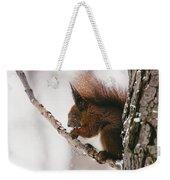 Squirrel In Winter Weekender Tote Bag