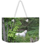 Stallion On Independence Day Weekender Tote Bag by Patricia Keller