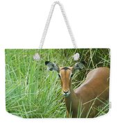 Standing In The Grass Impala Antelope  Weekender Tote Bag