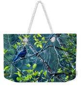 Steller's Jay In A Tree Weekender Tote Bag