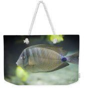 Striped Tropical Fish Desjardini Tang Weekender Tote Bag