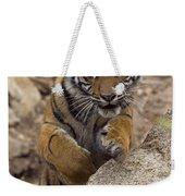 Sumatran Tiger Cub Jumping Onto Rock Weekender Tote Bag