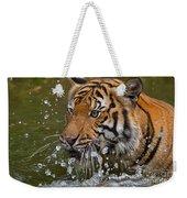Sumatran Tiger Splashing In The Water Weekender Tote Bag