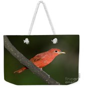 Summer Tanager Male Perched-ecuador Weekender Tote Bag