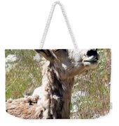 Sunbathing Mountain Sheep Weekender Tote Bag