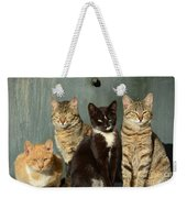 Sunbathing Cats Weekender Tote Bag
