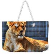 Sunbathing Lioness  Weekender Tote Bag