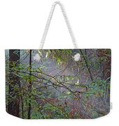 Sunlight Highlights In Armstrong Redwoods State Preserve Near Guerneville-ca Weekender Tote Bag